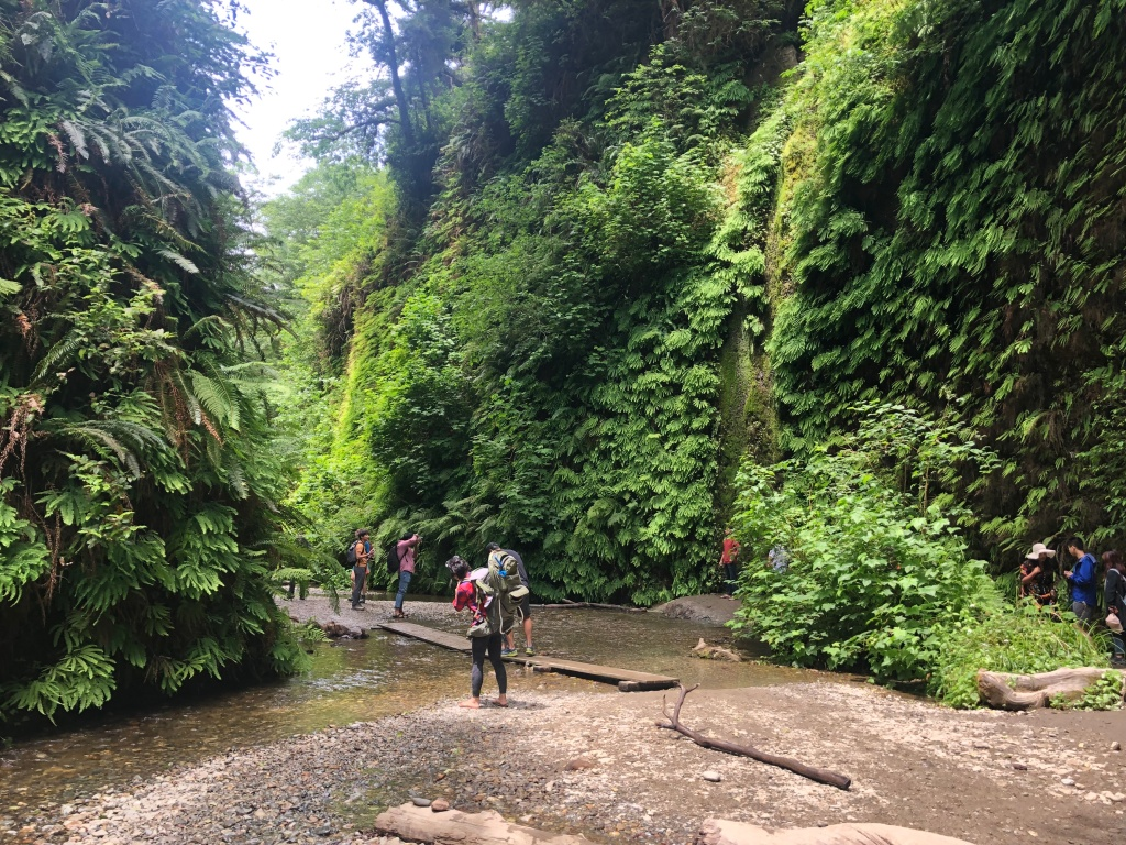 Hiking Fern Canyon in Redwood National Park